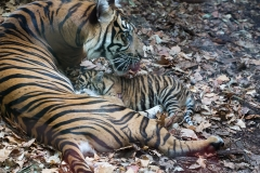 Frankfurter Zoo 2013