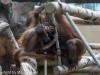 Kölner Zoo 31.05.2013