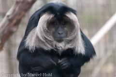 Toronto Zoo März 2013