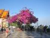 thailand-2011-519