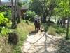 thailand-2011-658