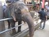 thailand-2011-689