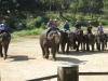thailand-2011-704