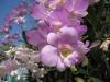 thailand-2011-096
